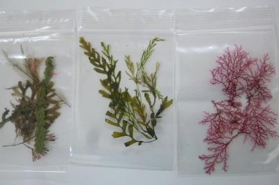 海藻や海草