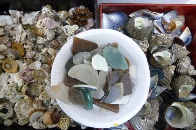 シーグラス、貝殻